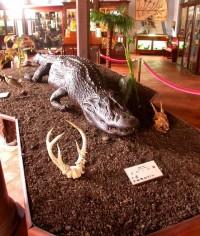 Exposition musée de Guyane